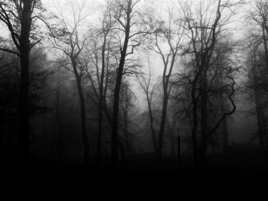 Forêt3.jpg